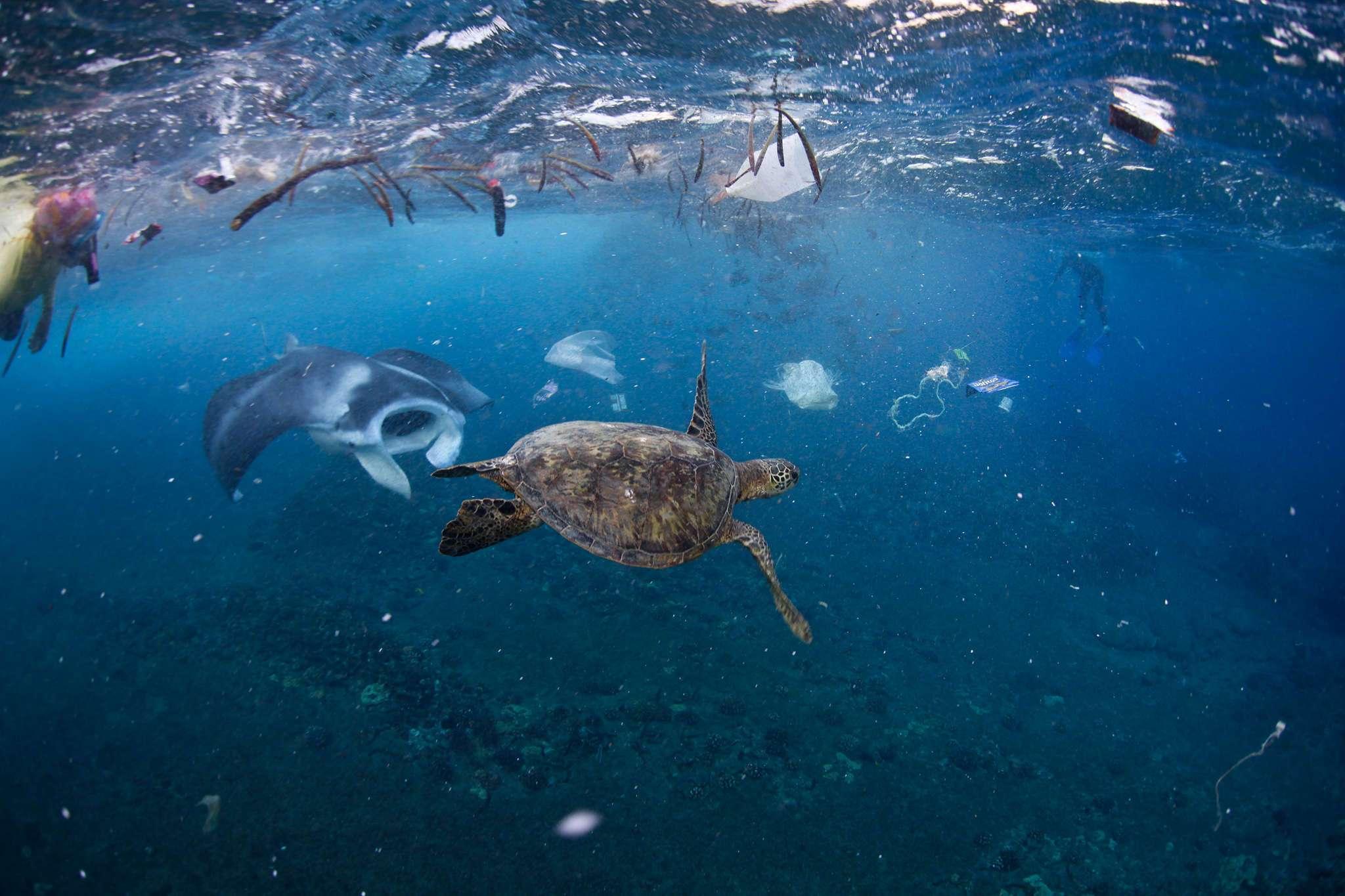 海洋垃圾.jpg