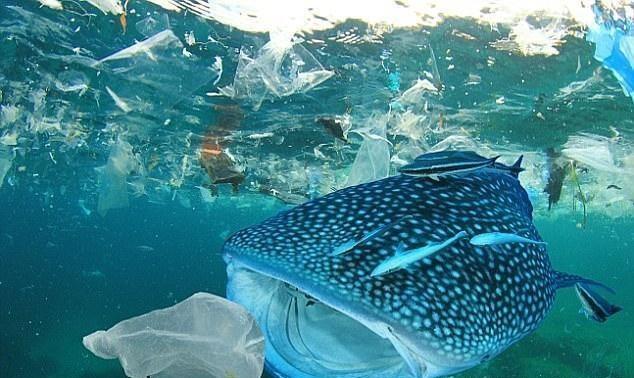 海洋垃圾7.jpg