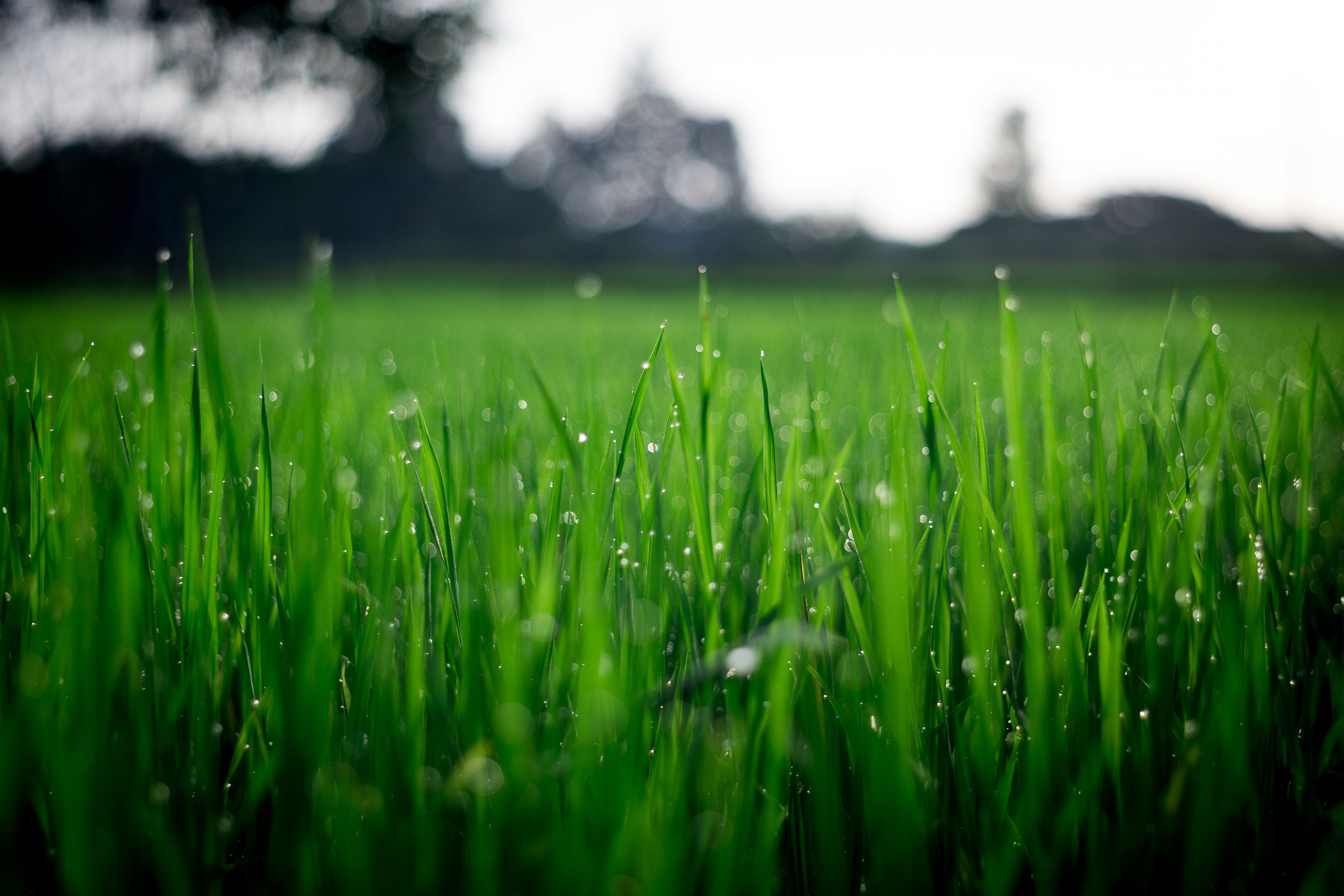 shallow-focus-photography-of-green-grasses-during-daytime-212324.jpg
